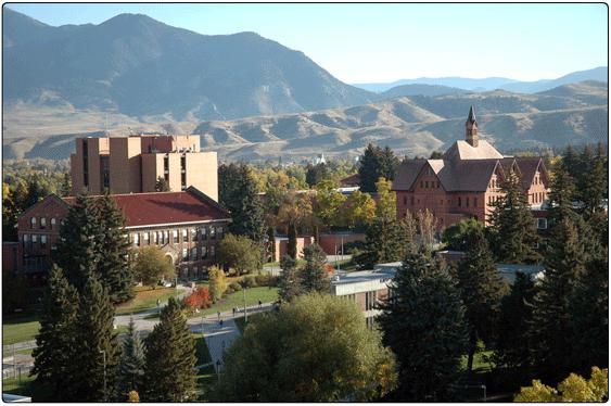 Universities-MSU